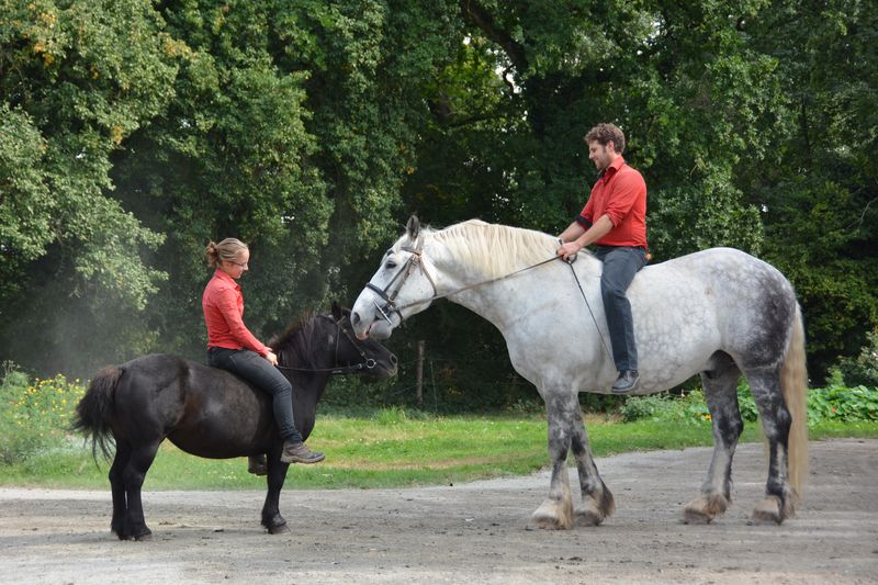 Spectacle Equestre